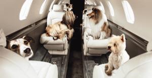 chiens sur avion