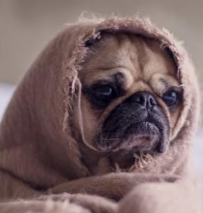 chien avec couverture sur avion