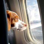 En jet privé, les animaux aussi ont leur place en cabine.