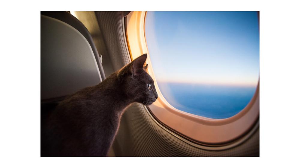 chat sur jet