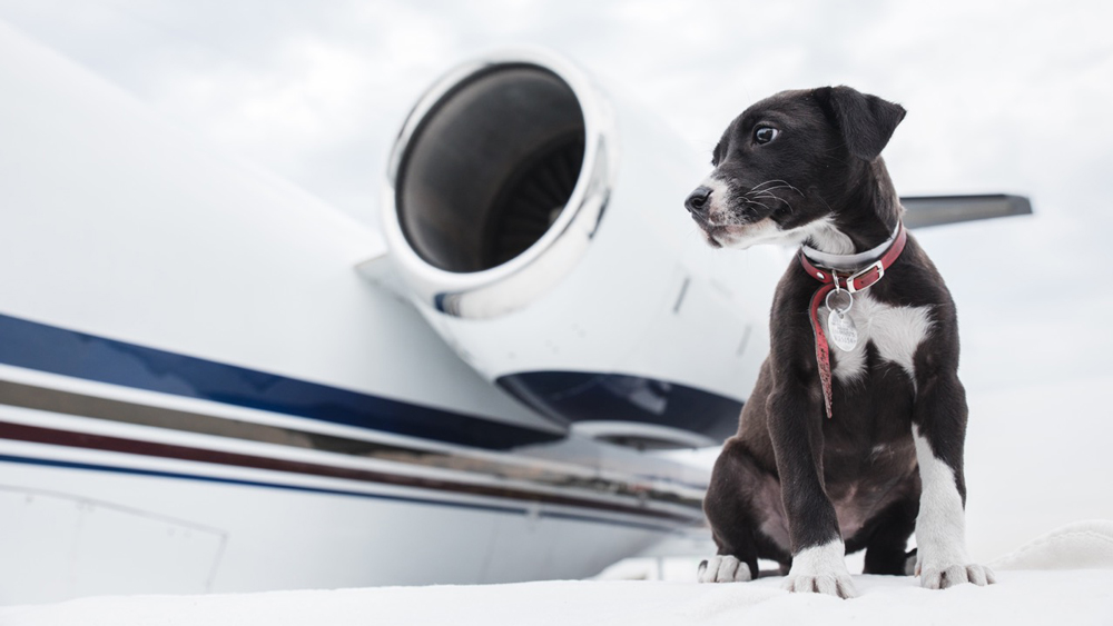 chien sur aile d'avion