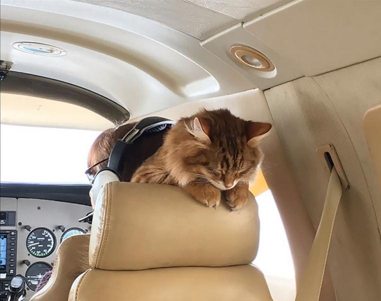 chat en jet privé